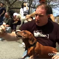 Cool Hunting Video Presents: The Dachshund Spring Fiesta 2007