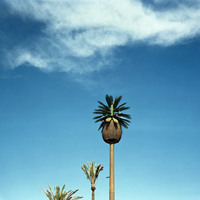 A Place In The Sun: Picturing California