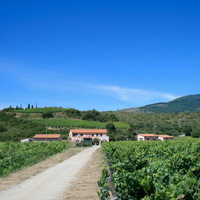 Cecilia Wines