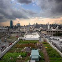 Urban Farming