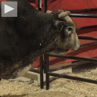 Cool Hunting Rough Cut: Professional Bull Riders
