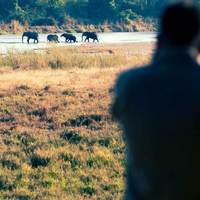 CH Zambia: Bushcamp Safari