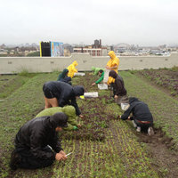  Brooklyn Grange: A Portrait of Urban Farming