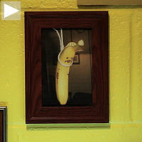 Cool Hunting Video Presents: The International Banana Museum