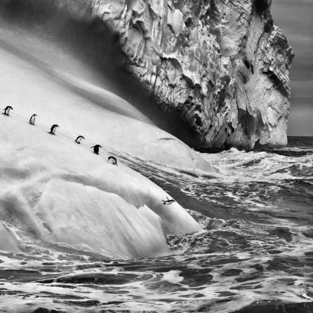Sebastião Salgado's Expansive Genesis Exhibition: The Brazilian photographer's earth-spanning collection of landscapes, animals and indigenous people hits the US for the first time