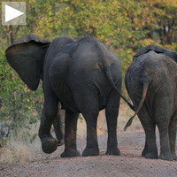Cool Hunting Video: CH Edition Zambia 2014