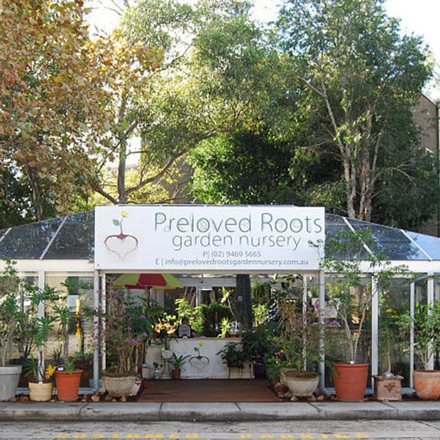 Preloved Roots Garden Nursery: A haven for neglected plants offering a chance at a second home