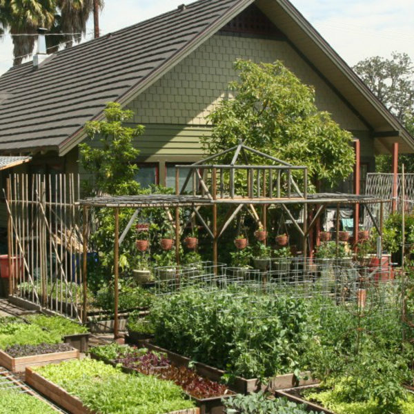 A Family Growing 6,000 lbs of Produce Annually at Home