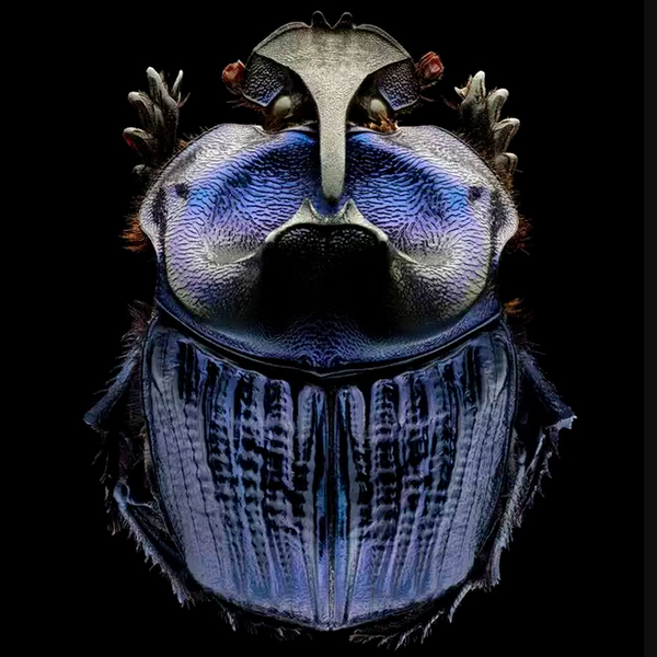 Remarkable Portraits of Insects