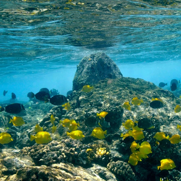 Hawaii Bans Common Sunscreens to Save Coral Reefs