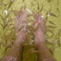 Fish Reflexology Spa