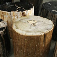 Hudson Furniture Petrified Wood: Thorn Tree Project Benefit