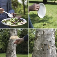 UFO Disposable Birdseed Plates