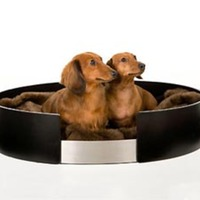 Urban Dreams Pet Bed