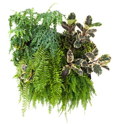 WALLY_VERTICAL_GARDEN.jpg