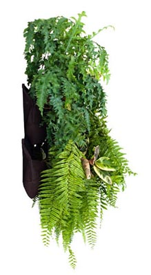 WALLY_VERTICAL_GARDEN1.jpg