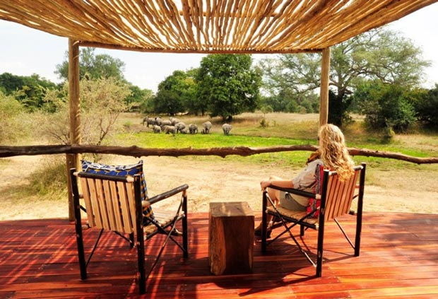 patiosafari.jpg
