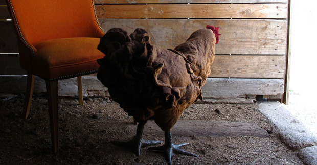chicken-footstools-2.jpg