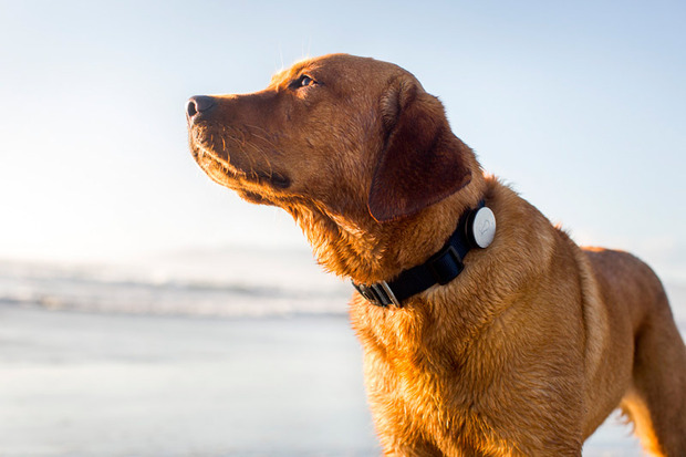 Whistle-dog-app-1.jpg