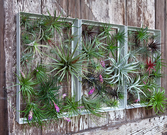 airplantman-airplantframe-2.jpg