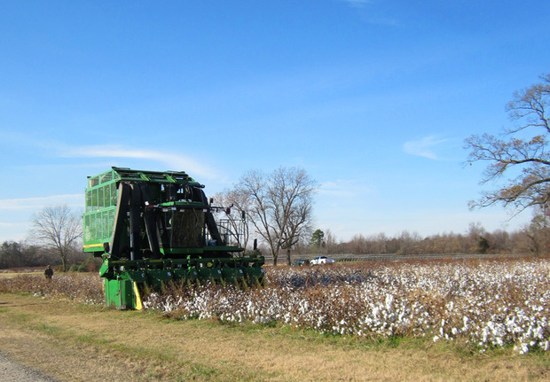 Raleigh-Denim-Organic-Cotton-Harvest.jpg