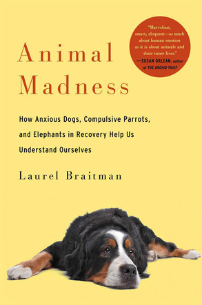 AnimalMadnessCoverImage.jpg