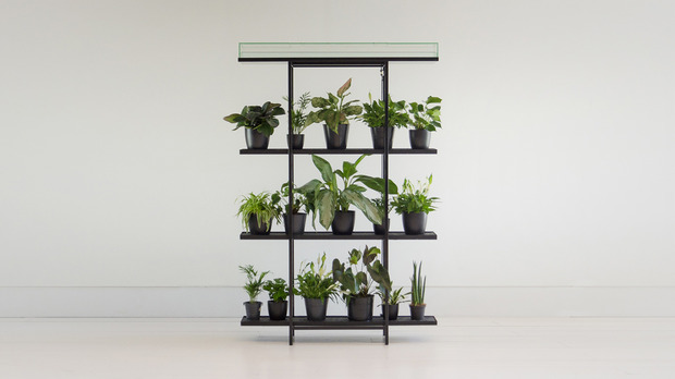 Low maintenance indoor gardening with pikaplant cool hunting for Cool low maintenance plants